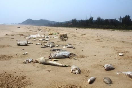 cá chết bất thường ở miền Trung