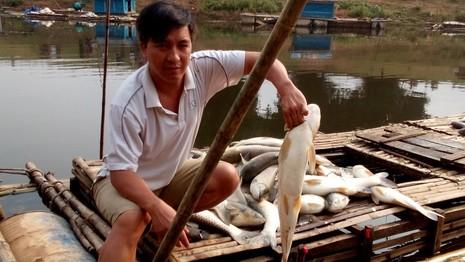 Thanh Hóa: Cá chết trắng bụng hàng chục tấn, dân chỉ biết khóc  - ảnh 2