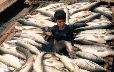 Vụ cá chết trên sông Bưởi: Đình chỉ hoạt động nhà máy 6 tháng - ảnh 2