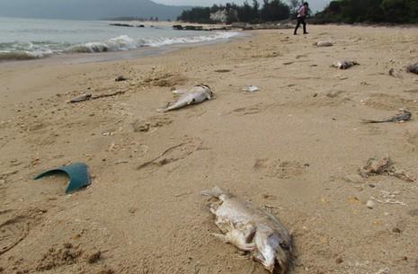 Chưa xác định được vì sao có độc tố gây cá chết  - ảnh 2