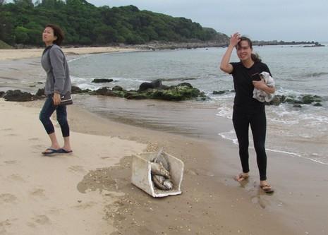 Cá chết hàng loạt dạt vào bờ biển 4 tỉnh miền Trung - ảnh 2