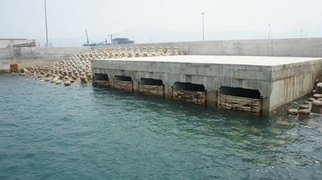 Đưa mẫu nước 'lạ' và mực chết ở biển Vũng Áng ra Hà Nội phân tích - ảnh 2