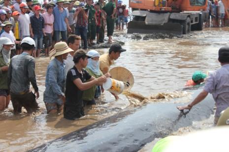 Chùm ảnh: 7 giờ miệt mài giải cứu cá voi 15 tấn  - ảnh 10