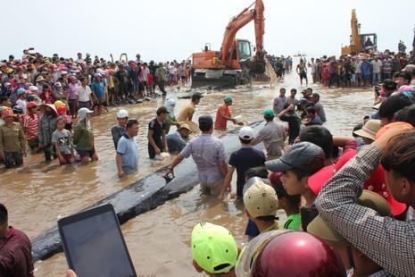 Chùm ảnh: 7 giờ miệt mài giải cứu cá voi 15 tấn  - ảnh 13