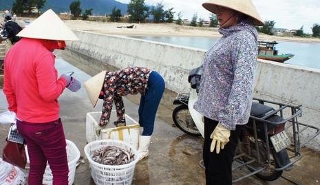 Người bị ảnh hưởng bởi sự cố cá chết do Formosa được hỗ trợ BHYT - ảnh 2