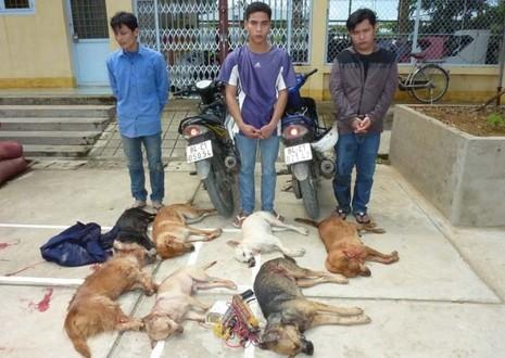 'Sục sôi' tranh luận quanh đề xuất gây khó việc xử trộm chó  - ảnh 1