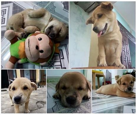 Chú chó bị cẩu tặc quay lại giết chết sau vài ngày trốn thoát về nhà - ảnh 1