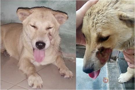 Chú chó bị cẩu tặc quay lại giết chết sau vài ngày trốn thoát về nhà - ảnh 2