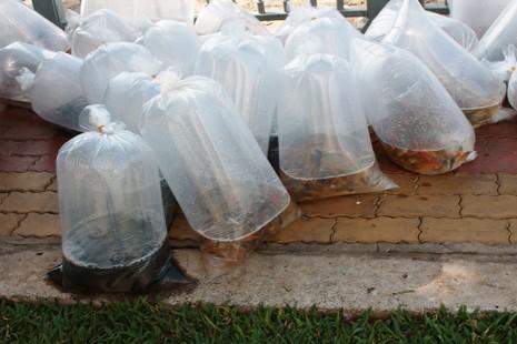 Gần 500.000 con cá giống – tương đương 10 tấn cá được thả xuống dòng kênh