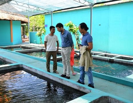 Cá Koi 'khủng' của Nhật về vùng ven Sài Gòn - ảnh 2