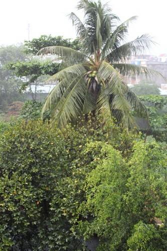TP.HCM: Cơn mưa chiều có sấm sét dữ dội khiến nhiều người hoảng hốt - ảnh 3