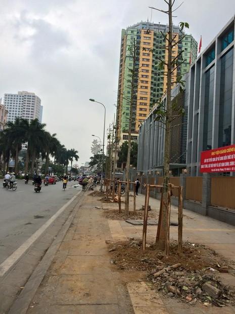 Mới: Công bố kết luận thanh tra vụ thay thế cây xanh ở Hà Nội - ảnh 1