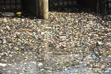 Cá thoi thóp nổi đầy trên kênh Nhiêu Lộc - ảnh 9