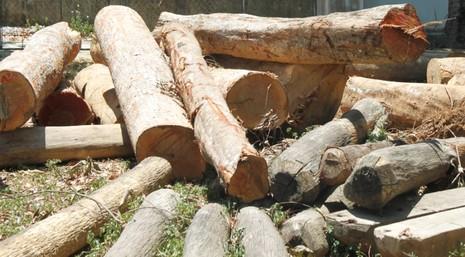 Điều tra hai vụ phá rừng quy mô lớn - ảnh 1