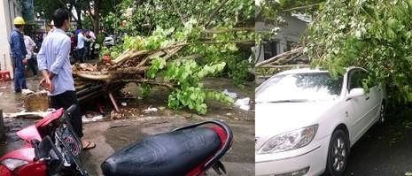 Cây bồ đề lớn bị đổ sập sau trận mưa ngay trung tâm TPHCM - ảnh 1