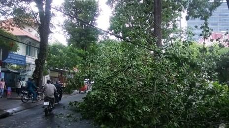 Cây bồ đề lớn bị đổ sập sau trận mưa ngay trung tâm TPHCM - ảnh 2