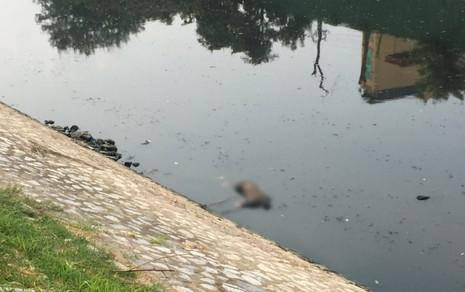 Hàng trăm người kéo xem xác chết trên sông Tô Lịch - ảnh 2