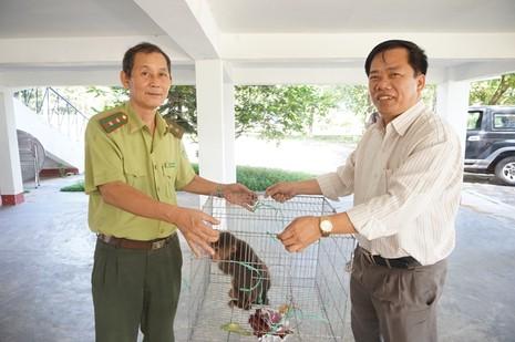 Người dân bỏ tiền triệu mua khỉ để thả về thiên nhiên - ảnh 1