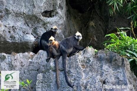 11 loài có nguy cơ tuyệt chủng tại Việt Nam - ảnh 4