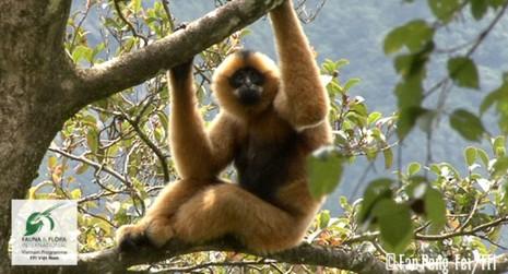11 loài có nguy cơ tuyệt chủng tại Việt Nam - ảnh 1