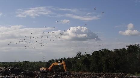 Chùm ảnh: Cò lũ lượt kéo về … bãi rác - ảnh 1