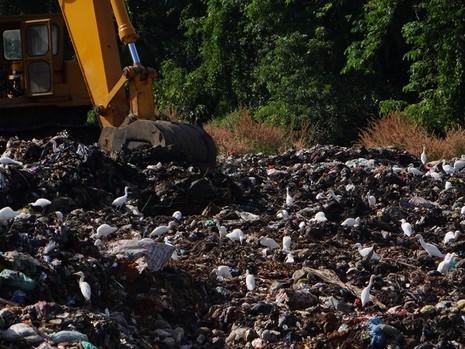 Chùm ảnh: Cò lũ lượt kéo về … bãi rác - ảnh 4