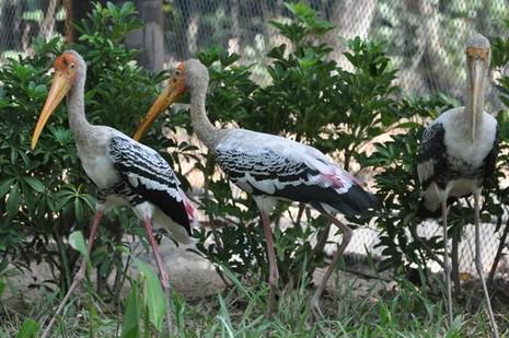 Khai trương vườn thú bán hoang dã lớn nhất châu Á  - ảnh 12