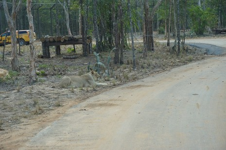 Khai trương vườn thú bán hoang dã lớn nhất châu Á  - ảnh 6