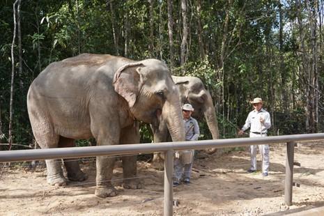 Khai trương vườn thú bán hoang dã lớn nhất châu Á  - ảnh 10