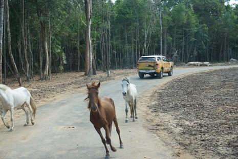 Khai trương vườn thú bán hoang dã lớn nhất châu Á  - ảnh 9