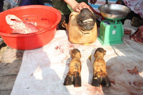 Hàng trăm con bê bị giết thịt tại chợ 'bán rủi cầu may' - ảnh 6