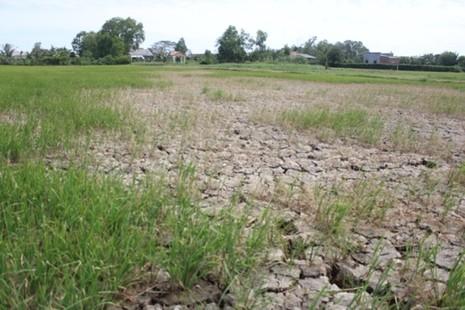 Xâm mặn 90 km, nửa triệu dân thiếu nước sinh hoạt trầm trọng - ảnh 4