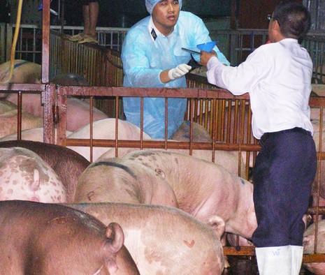 Buộc cam kết không sử dụng chất cấm trong chăn nuôi - ảnh 1