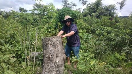 Bắt phó giám đốc và nhân viên bảo vệ rừng thuê… lâm tặc phá rừng - ảnh 1