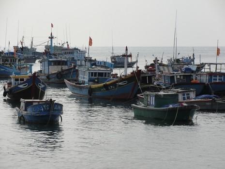 Huyện đảo Lý Sơn có nhiều tàu hành nghề lặn biển