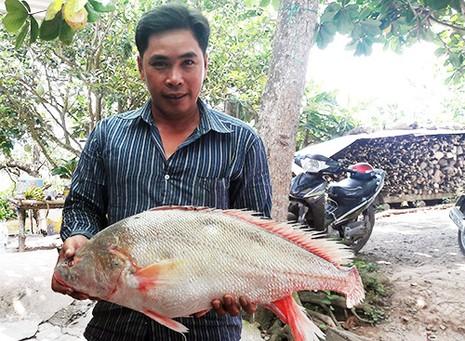 ca-su-vang-5-5-kg-mac-luoi-ngu-dan-tren-song-hau