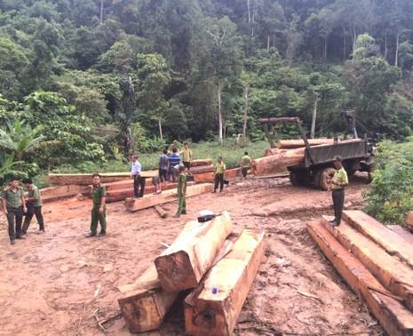 Hiện trường bãi tập kết gỗ bị phát hiện