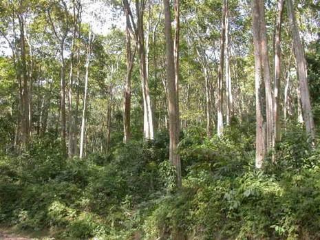 Bảo vệ rừng chuyên trách được sử dụng súng bắn đạn cao su