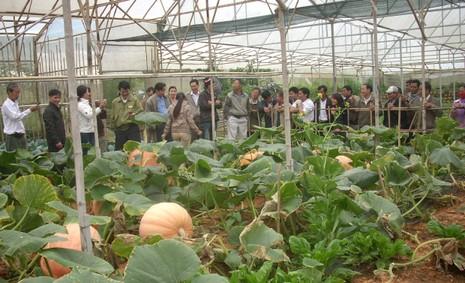 Chiêm ngưỡng những trái bí khổng lồ ở Đà Lạt - ảnh 3