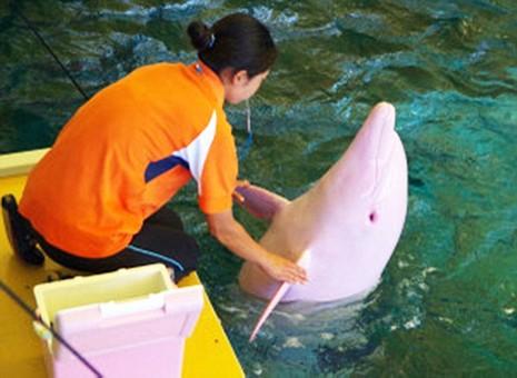 Chú cá heo đổi màu khi tức giận hoặc buồn bã - ảnh 3