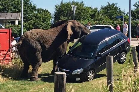 Bị đánh nặng, voi 'nổi điên' tấn công gánh xiếc - ảnh 1