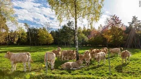 Loại thịt bò đắt tiền nhất thế giới có hương vị ra sao? - ảnh 4