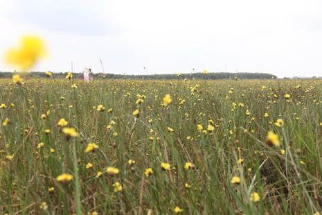 Tháng 5, đến Tràm Chim ngắm hoa lạ - ảnh 3
