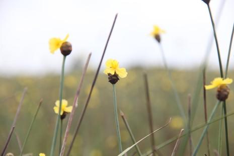 Tháng 5, đến Tràm Chim ngắm hoa lạ - ảnh 2