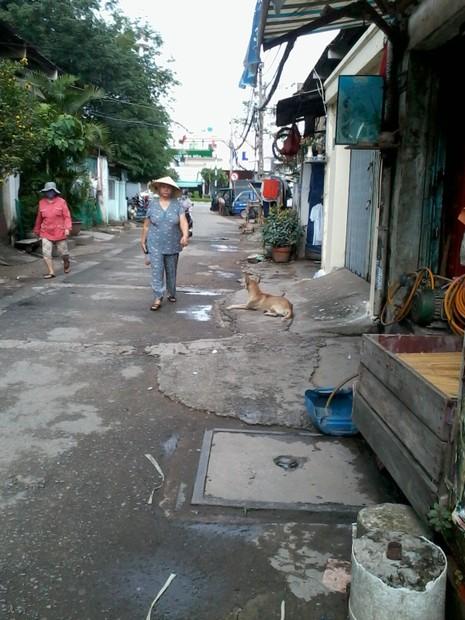 Ở TP.HCM, chó thả rông rất nhiều - ảnh 2