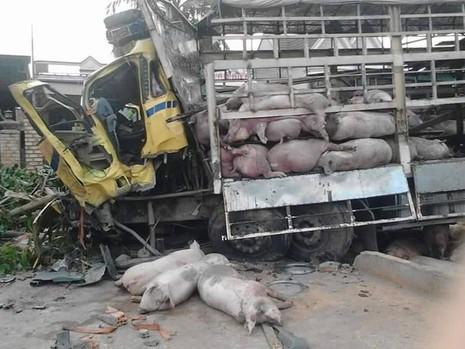 Chùm ảnh: Gần 100 chú heo nằm chết la liệt sau vụ tai nạn  - ảnh 6