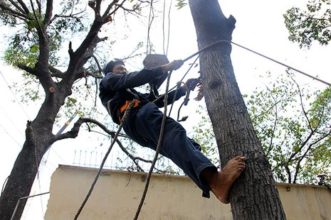 Bứng dưỡng 14 cây sọ khỉ trên đường Tôn Đức Thắng - ảnh 8