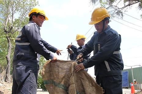 Bứng dưỡng 14 cây sọ khỉ trên đường Tôn Đức Thắng - ảnh 3