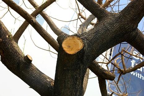"""Hàng loạt cây xanh ở TP.HCM """"chết đứng"""" - ảnh 5"""