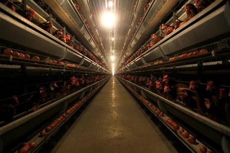Mặt trận Tổ quốc đi giám sát an toàn thực phẩm  - ảnh 3